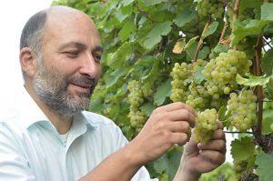 Thomas Steigelmann prüft den Geschmack der Trauben