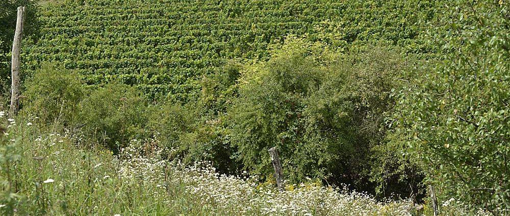 Naturschutz im Weinbau