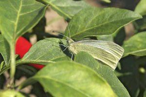 Ökologischer Anbau ohne Einsatz von Pestiziden und Herbiziden